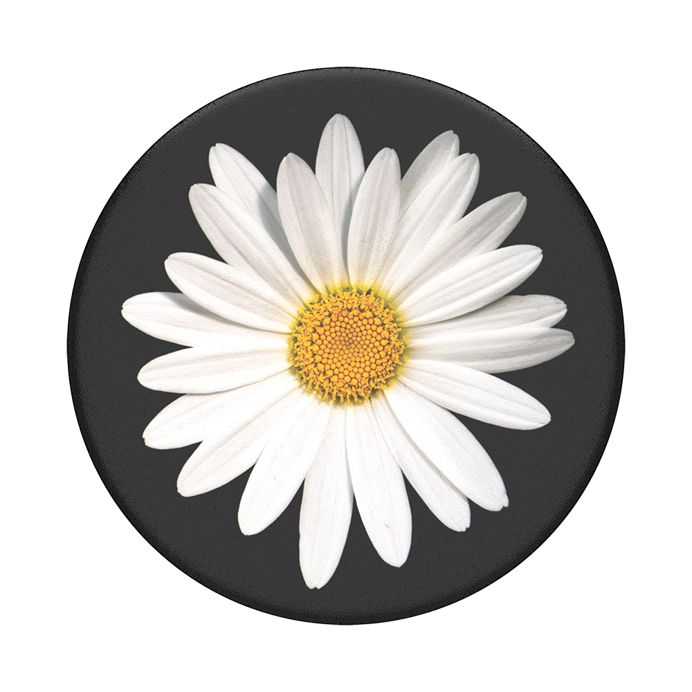 White-Daisy_01_Top-View
